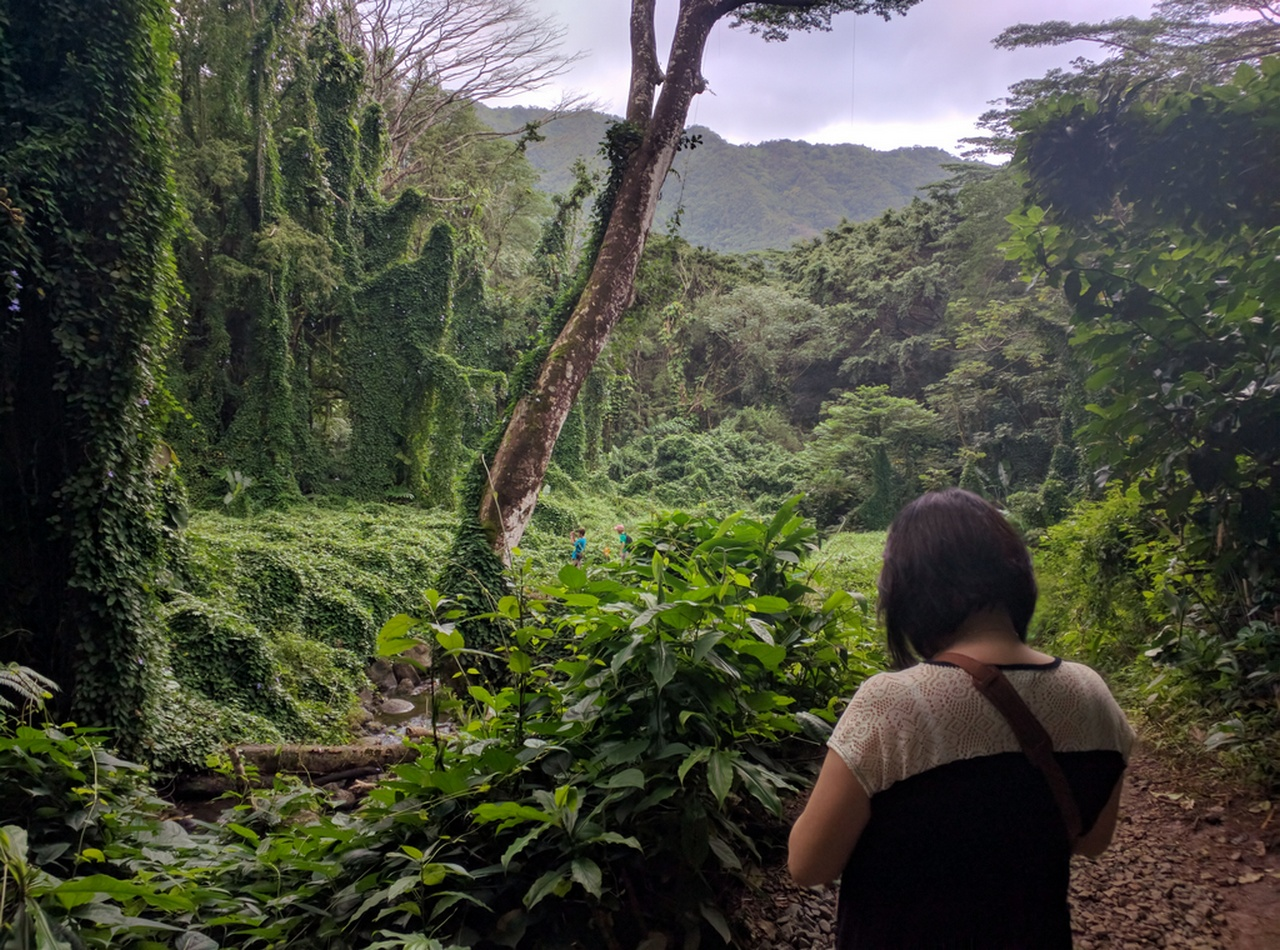 On the trail to Manoa Falls